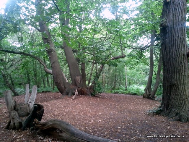Norsey Woodland